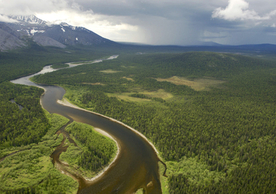 Virgin Komi Forest in the northern Ural Mountains in the Komi Republic, Russia. MARKUS MAUTHE / GREENPEACE
